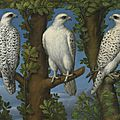 Lombard master, 1540 – 1560, portrait of a gyrfalcon, viewed from three sides