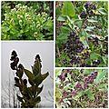 Jardin avril (11)