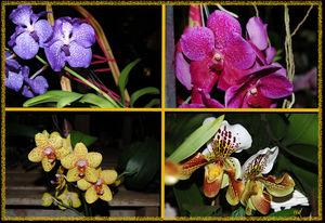 Copie_de_Les_4_orchid_es_recadr_es_1