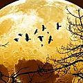 la super lune du 3 décembre 2017