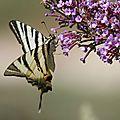 Le battement d'ailes du papillon