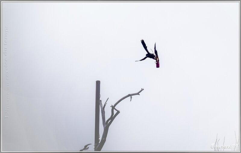 puy du fou La chasse au leurre nouveau costume du bal des oiseaux (9)