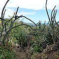 0 cactus P1010808