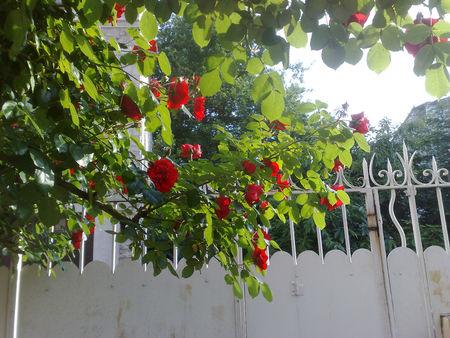 rosiergrille