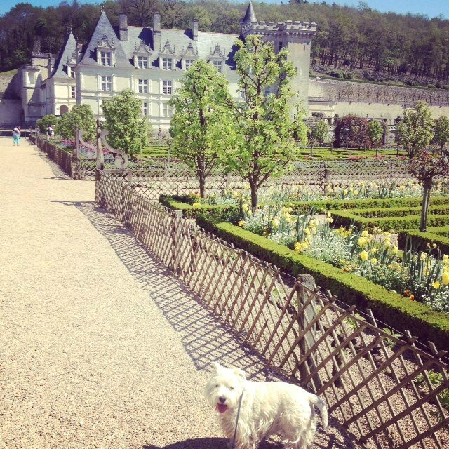 Dog-friendly Place : Château de Villandry