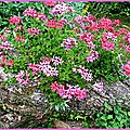 tronc-fleuri