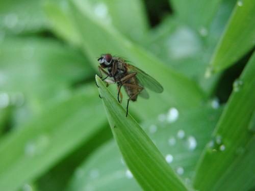 2008 05 12 Une mouche