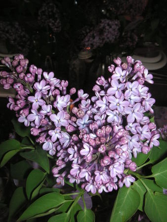 table_lilas_063