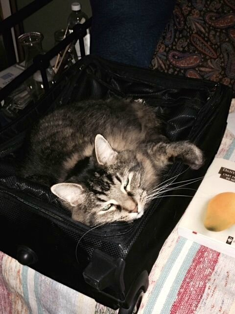 Léon couve ma valise!