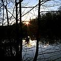 La vie de l'étang