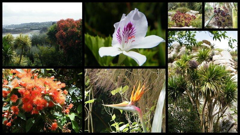 2014-08-29 roscoff jardin3