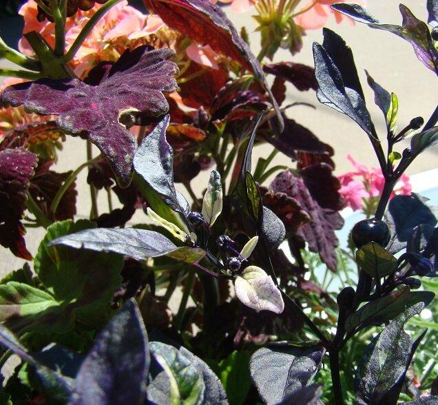 Détail d'un pot de fleurs
