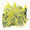 Défi n°51 : Les mimosas