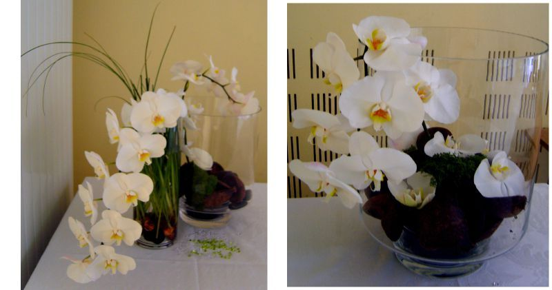 Orchidee blanche decoration design d 39 int rieur et id es for Decoration murale kross