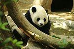 250px_Lightmatter_panda
