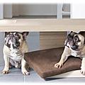 Fashion : les meubles pour animaux.