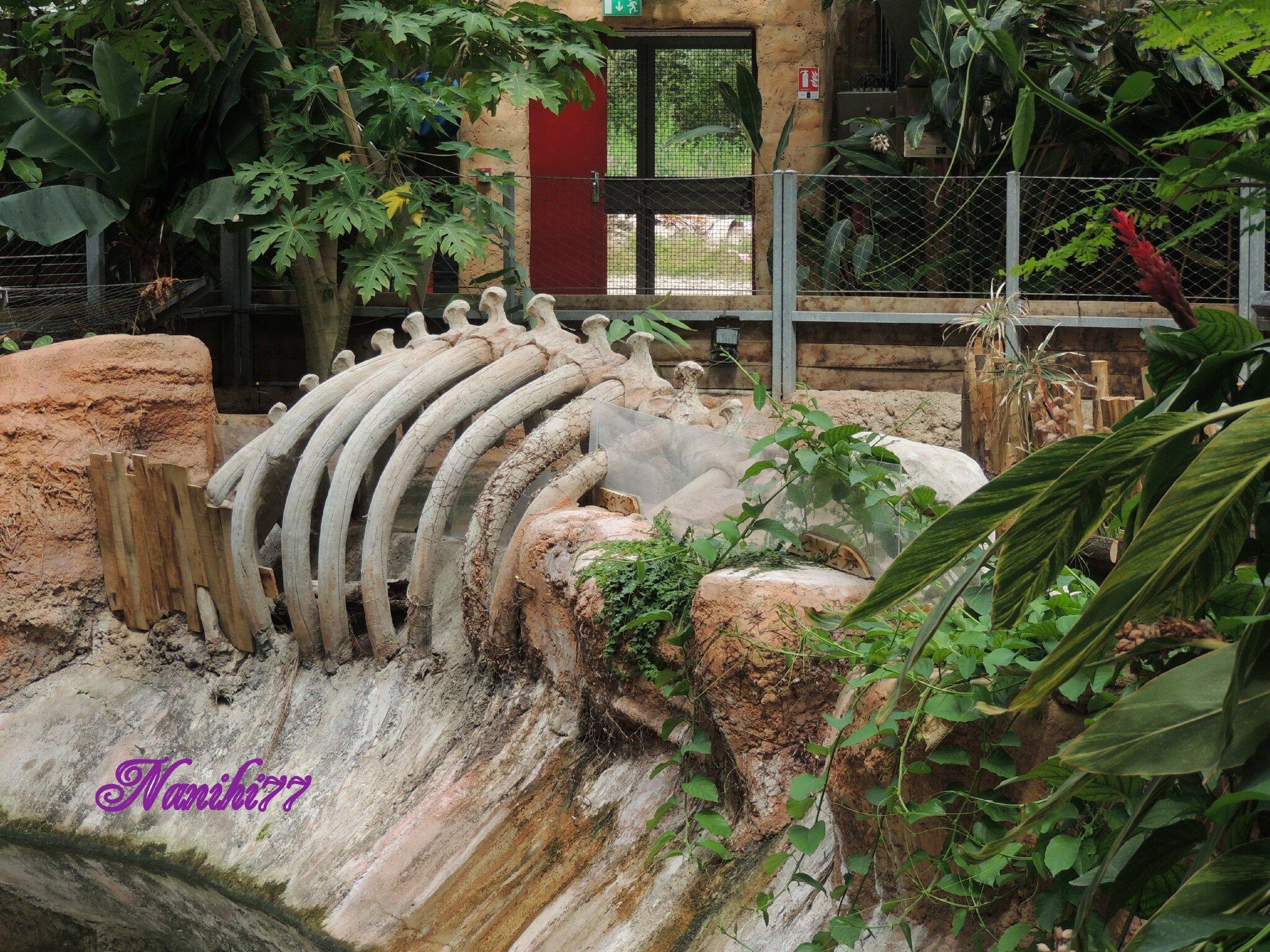 Il ny a pas que des crocodiles ou des caïmans on trouve aussi un parc de tortues de terre à lintérieur de la serre et des tortues de mer à lextérieur de