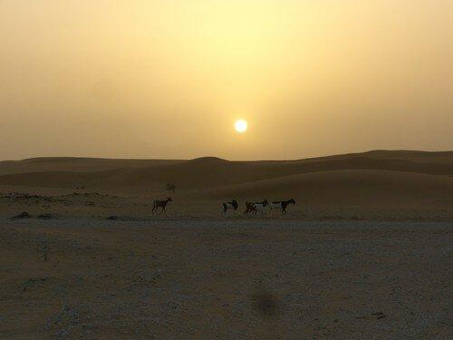 Coucher de soleil, chèvres au premier plan