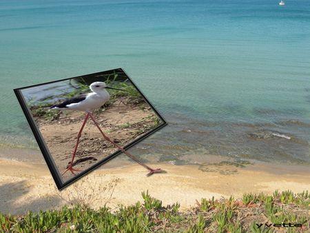 oiseau sortant d'un cadre