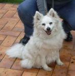 Adoption_chien_Donnat_