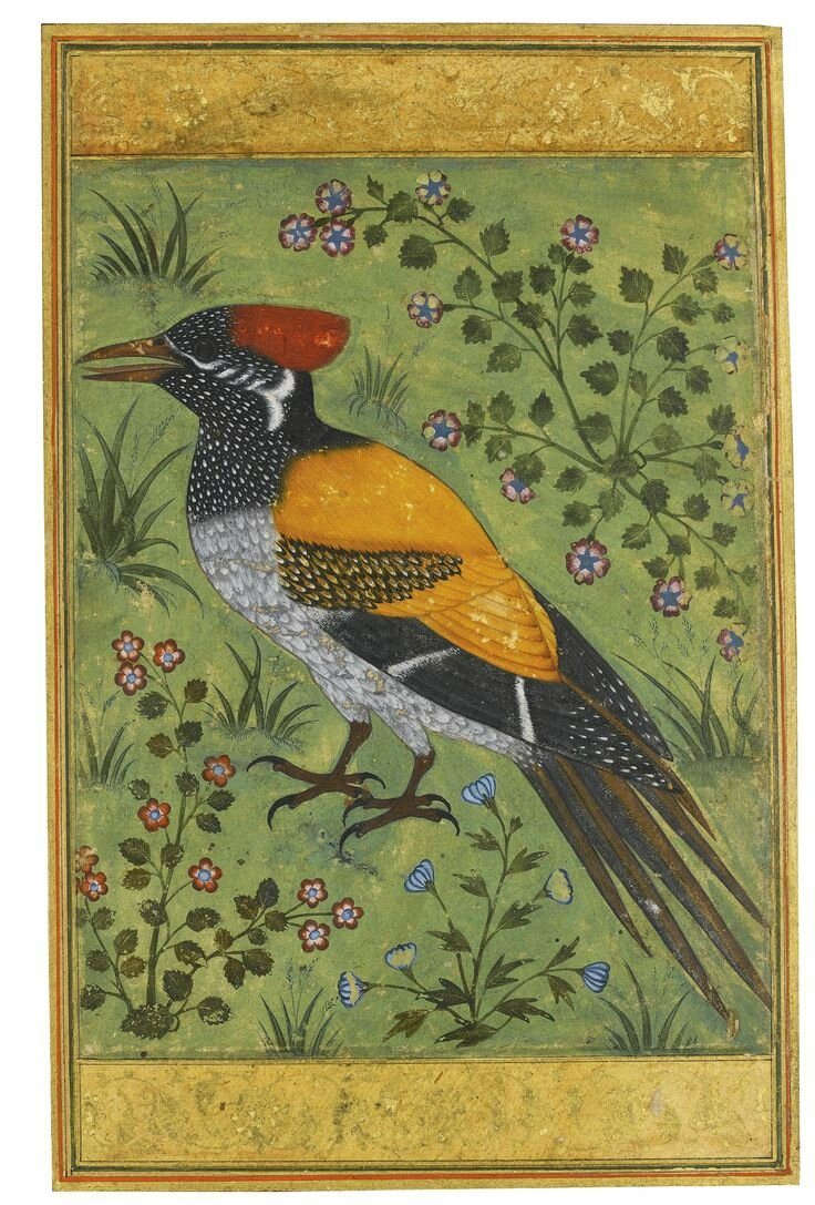 A yellow-backed woodpecker, attributed to Mansur, Mughal, circa 1585-90
