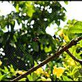 Spiderclown (1)