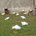 poules en liberté !!