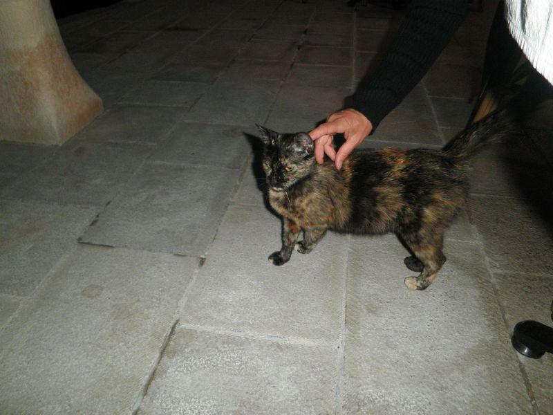 mne - chat baie de kotor