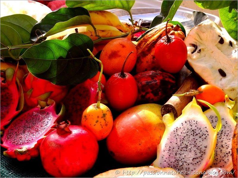 Fruits exotiques (6)