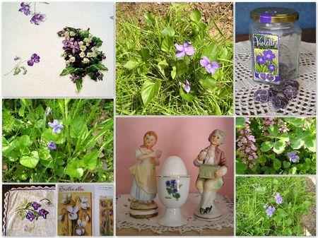 violettes_montage_dim