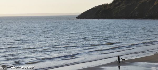 Le-chien-et-son-maitre-sur-la-plage