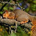 Un écureuil de feuilles avec thérèse59, 23e inscrite