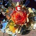 Choux de Noël 21 décembre 2007