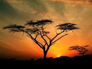 Medium marabout africain