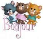 bonjour_3_chatons