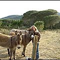 Le domaine des 2 ânes - corbieres