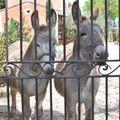 ignasse et milou mai 2008 042