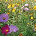 Fleurissement Muhlbach sur Bruche 2009