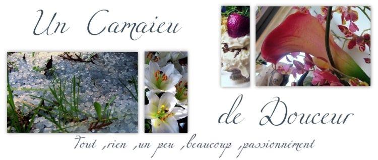elle_est_belle__la_banni_re