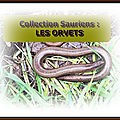 Collection sauriens : Les ORVETS