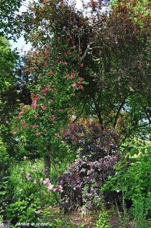 Jardins-de-la-Javelière-0023