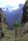 155412_simien_mountains