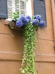 fenêtres et volets peints + façades (38)