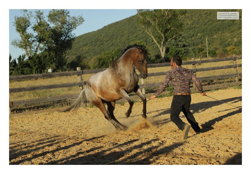 hotos JMP©Koufra 12 - El Rancho - Le Mas de Sisco - 25082020 - 0739