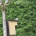 Oiseaux dans le jardin, oiseaux sur les coussins