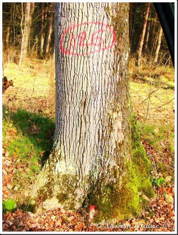Le bois en forêt (15)