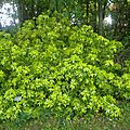 z arbustes à fleurs du jardin