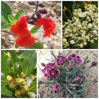 Fleurs mai 2013 (8)