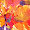 feuilles-automne15-35