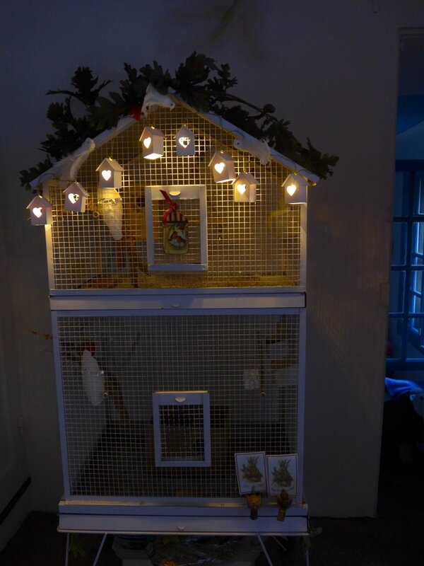 cage de KiWI et Pastel